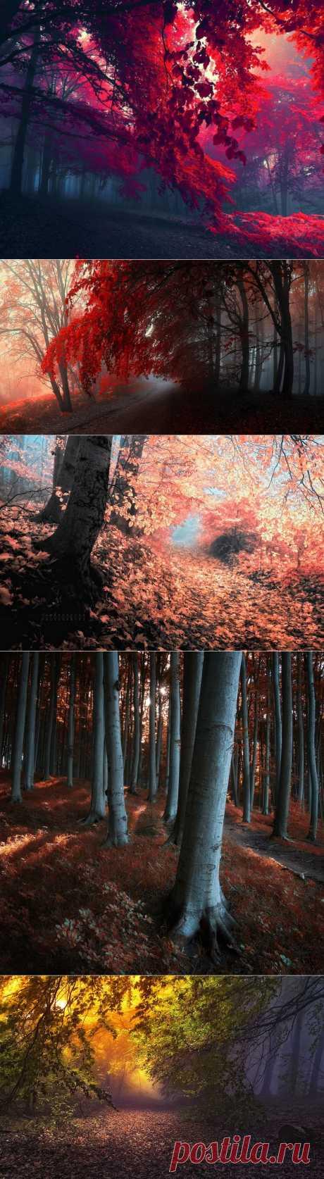 ... в лесу Я становлюсь другим....