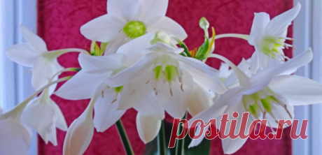 Домашние цветы и знаки зодиака | Lifestyle.com.ua