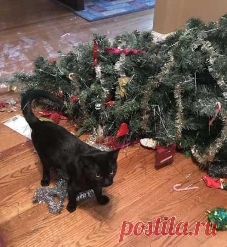 Как коты усложняют жизнь своим любящим хозяевам (19 фото) . Тут забавно !!!