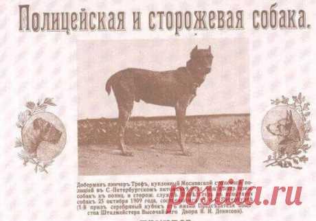 Полицейские служебные собаки: задержание преступника