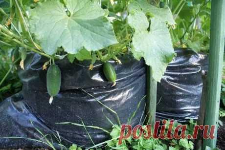 Приготовление быстрого компоста в черных полиэтиленовых мешках