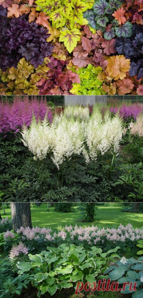 Тенелюбивые цветы для сада, в том числе многолетние