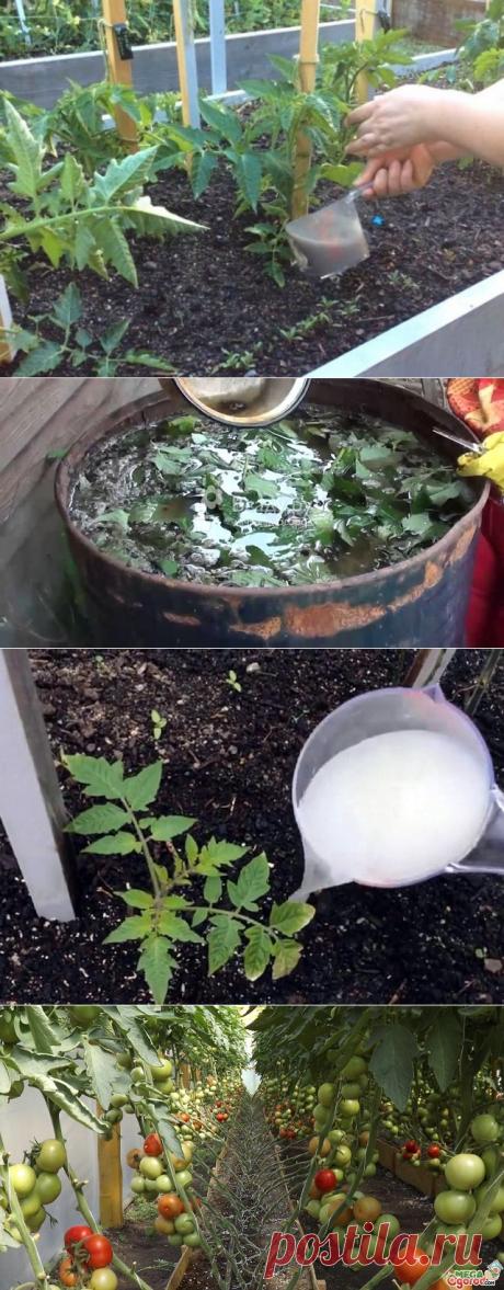 Чем подкормить помидоры после высадки в грунт.