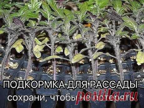 (1) Одноклассники   Без лекарств