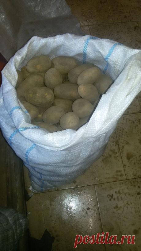Выращивание картошки по финской технологии. Наш опыт | Ферма.expert 🌿 | Яндекс Дзен