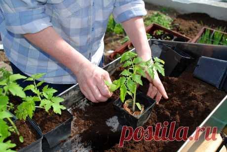 Посадка томатов на рассаду в 2020 году по лунному календарю: в марте