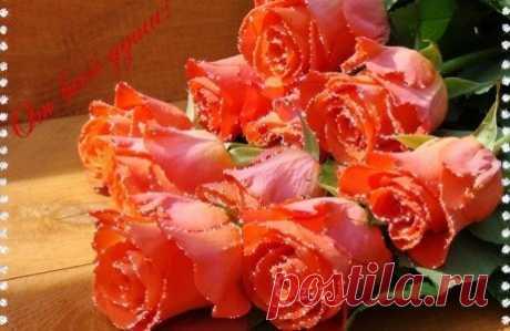 моим любимым,сокровищам ~ Стихи (Мир души) ~ Beesona.Ru