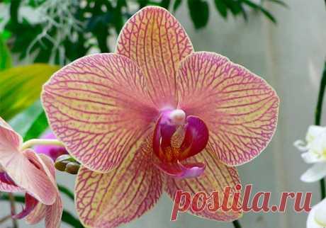 9 правил, благодаря которым орхидея будет буйно цвести круглый год. И всё исключительно своими руками. — informed news 24