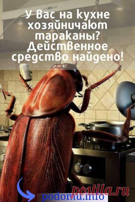 Тараканы выбирают теплые и влажные помещения. Их любимое место в доме — это кухня и ванная комната. Если в квартире течёт труба, много крошек и пищевых отходов, то прусаки обязательно посетят вас, и их непременно потребуется выводить. Иногда бывает, что в доме чисто и сух #таракан#прусак#насекомые#вредители#паразиты#инсектициды#дихлофос#вытравитьпрусаков