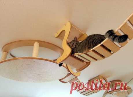 А ты играй, играй, играй, играй: детские площадки для кошек