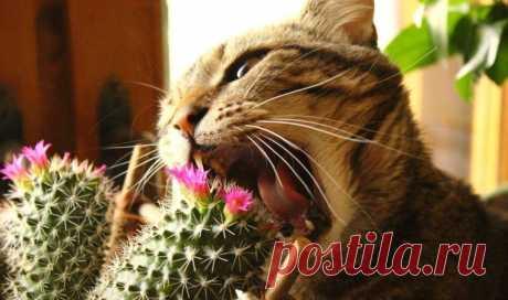 Комнатные растения и кошки: возможна ли жизнь в симбиозе?