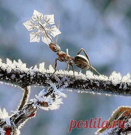 Другие народы нашей Планеты. муравей тащит снежинку..кому?  Любимой    Мы совсем про наших инопланетян не знаем. А они у нас под ногами...параллельные Вселенные.