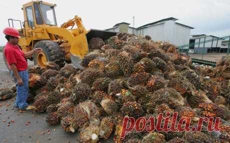 Власти обсудят запрет «грязного» пальмового масла в пищевой отрасли :: Бизнес :: РБК