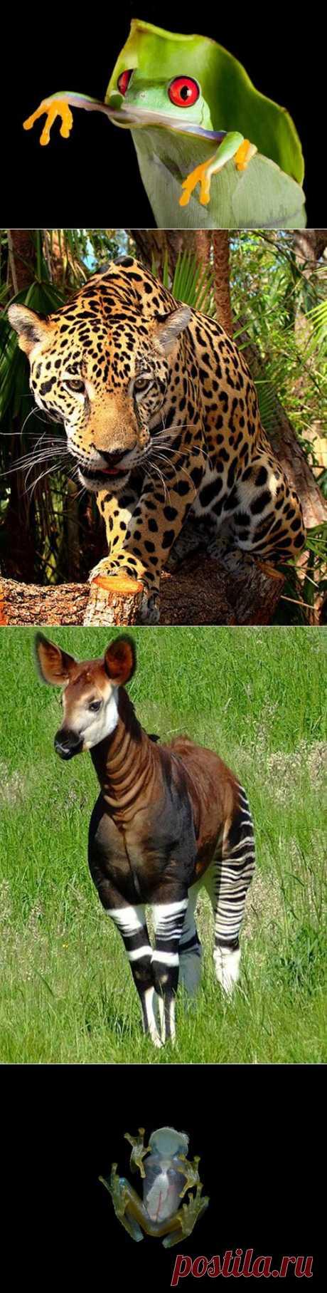 10 животных из дождевых лесов