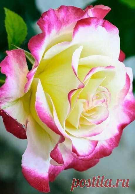 Мир прекрасных цветов. World of beautifuI colors — Фото | OK.RU