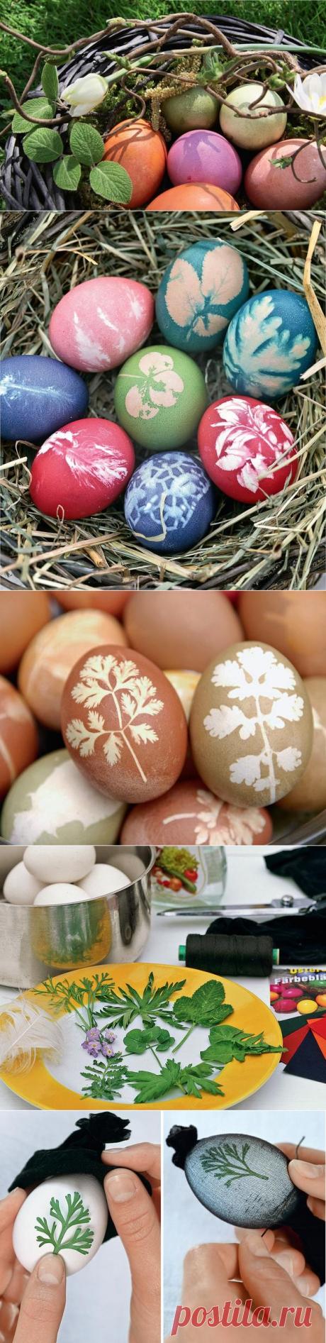 Раскрашенные природой: натуральные красители для пасхальных яиц / Пасха / 7dach.ru