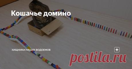 Кошачье домино
