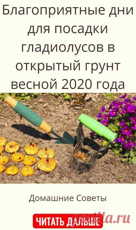 Благоприятные дни для посадки гладиолусов в открытый грунт весной 2020 года