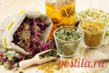Лекарственные растения на любой случай