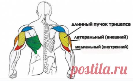 Самые эффективные упражнения для трицепса Прокачка рук для женщин и мужчин, которые увлекаются силовыми нагрузками, является важным условием тренировки. Особый акцент в упражнениях нужно сделать на трицепс. Это мышца плеча, расположенная сзади плечевой кости. Она отвечает за сгибание и разгибание