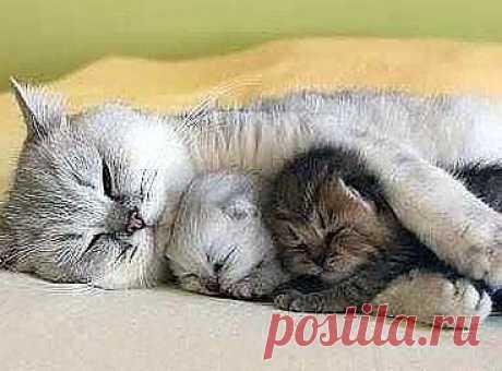 С мамой и сон слаще...