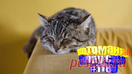 Вам нравится смотреть видео про смешных котов? Тогда мы уверены, Вам понравится наше видео 😍. Также на котомании Вас ждут: видео кот,видео кота,видео коте,видео котов,видео кошек,видео кошка,видео кошки,видео о котах, видео о кошках смешное, видео с котиками, и кошки, котики мило, кошка видео, кошки, приколы о кошках видео, про котиков, самые смешные животные, смешное котики, смешные видео про кошек, смешные кошки
