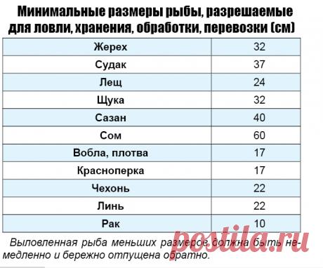 Какого размера, что, когда, на что можно ловить в Астраханской области - смотри в таблице | КаспийИнфо
