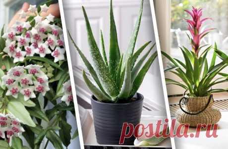 Какие комнатные растения не обязательно часто пересаживать? – 8 красивых примеров   Design-homes.ru   Пульс Mail.ru Покажем подборку растений для дома, которые отлично растут и украшают интерьер, не требуя частой пересадки.