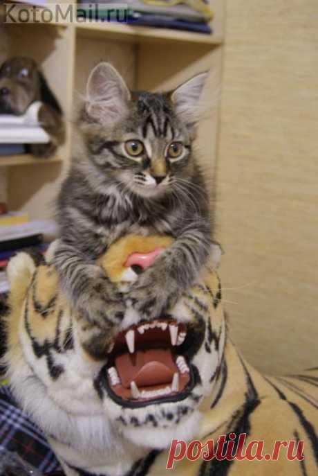 Я тоже тигр, но меня можно погладить