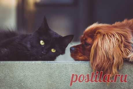 Проект об обязательной регистрации домашних животных внесен в Госдуму Изменения могут быть внесены в закон «Об ответственном обращении с животными» и иные законодательные акты.