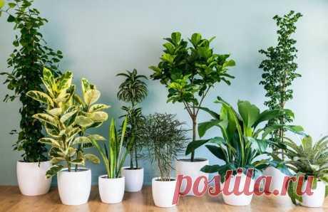 Пиво и водка для комнатных растений | Сад, дом, огород | Яндекс Дзен