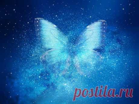 Звездная бабочка. Умная фантастика от Вербера | ПроЧтение | Яндекс Дзен