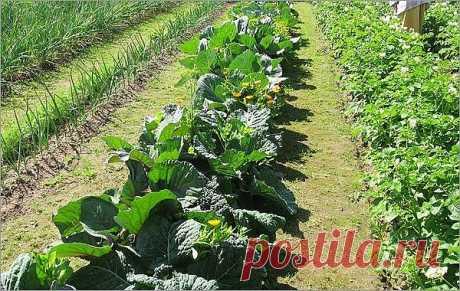 (99) Как с небольшого участка земли получить большой урожай овощей?