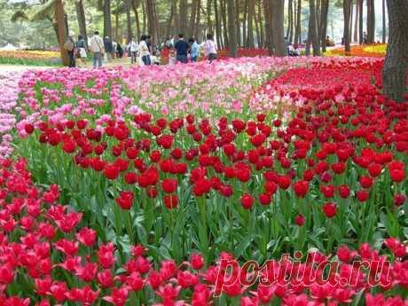 Рассветная страна цветов Hitachi Seaside Park - Путешествуем вместе