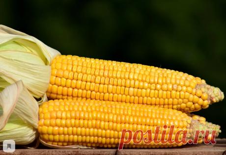 Вредна или полезна кукуруза? | Кастрюлька | Яндекс Дзен