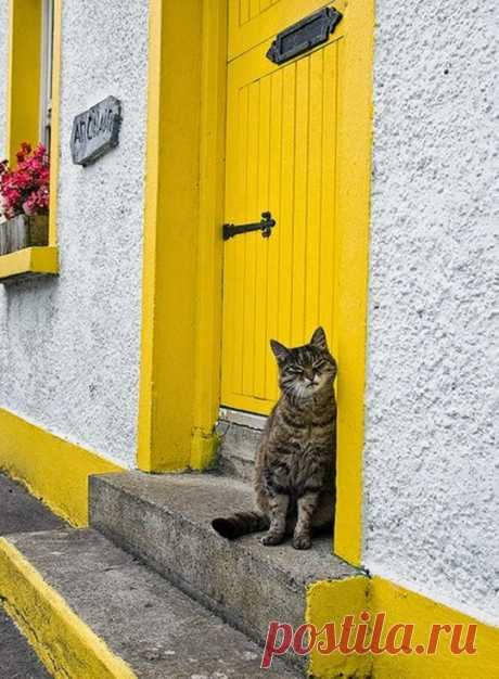 Cat from Galway {Ireland}
