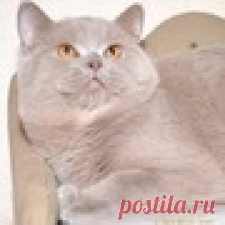 Ольга Прункова