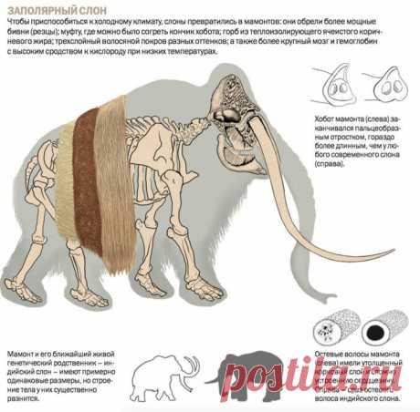 Люди жили в Арктике уже 45 тысяч лет назад