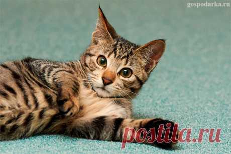 Как избавиться от запаха кошачьей мочи на ковре?