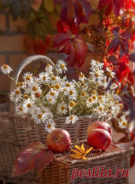 ღЗолотая середина лета Пролетела и умчалась вдаль. Зрелый Август поступью неслышной Подошёл... И всё ж немного жаль...
