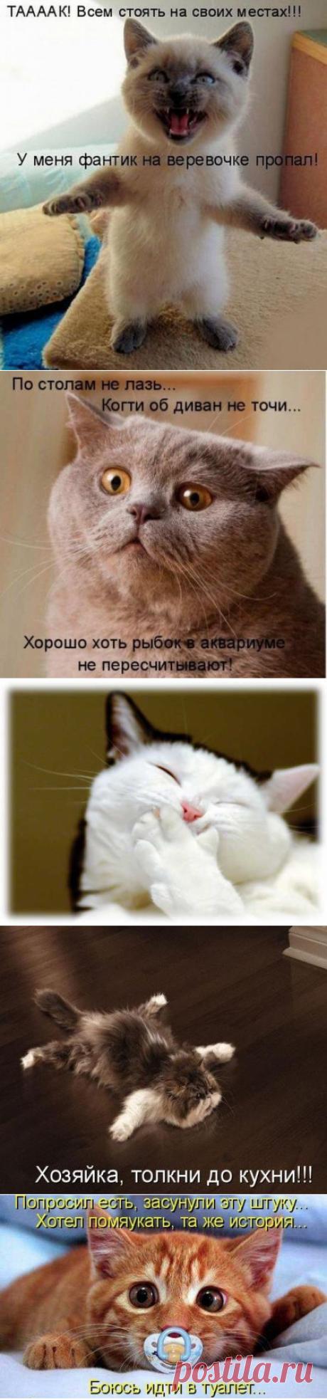 О чем думают коты и кошки