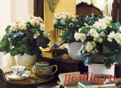 Удобряем домашние растения без химии! — Полезные советы
