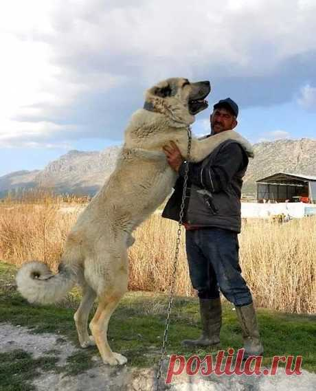 A los perros ha importunado la vida de perros y se han escapado de los muyadines a los militares rusos