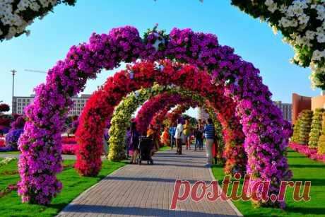 Удивительный Чудо Сад в Дубае