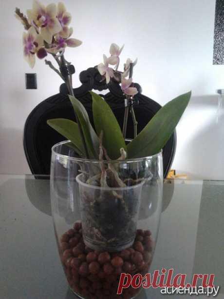Мои Фаленопсисы и мой личный опыт: Группа Комнатные растения