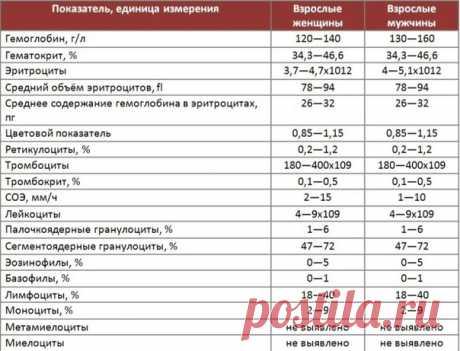 Вот как расшифровать анализ крови самостоятельно, без врача — Zdorovo-Tut