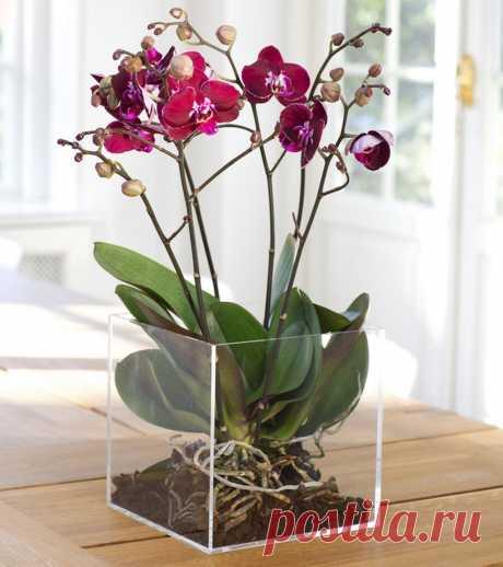 5 советов по уходу за фаленопсисом, самой продаваемой орхидеей в Румынии Адела Пярву - блогер по дизайну интерьера