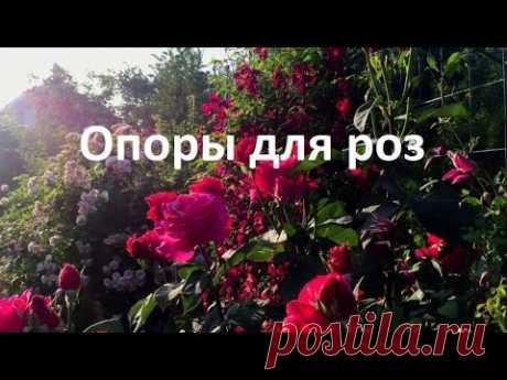 ОПОРЫ для РОЗ. Как выглядят кусты  роз весной,  и  летом.Наглядно ответы на вопросы.