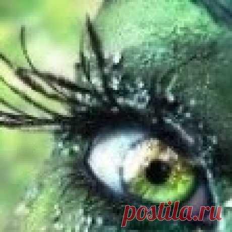 Елена Т