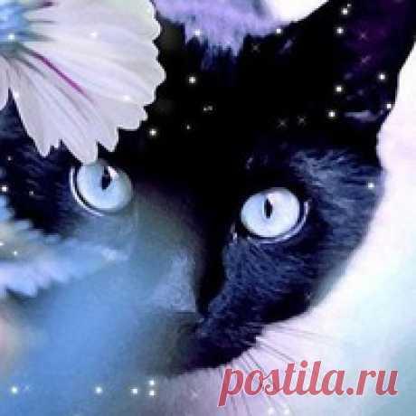 Галина Горлова